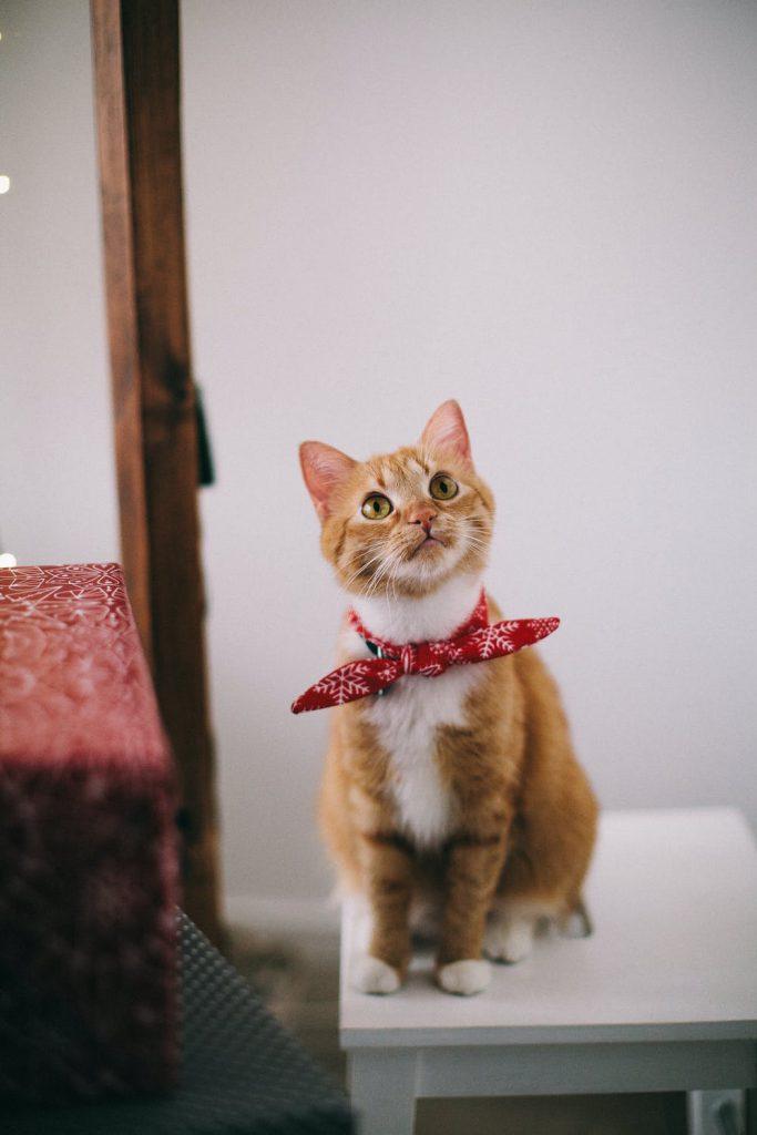 snoozle.nl kattenmand