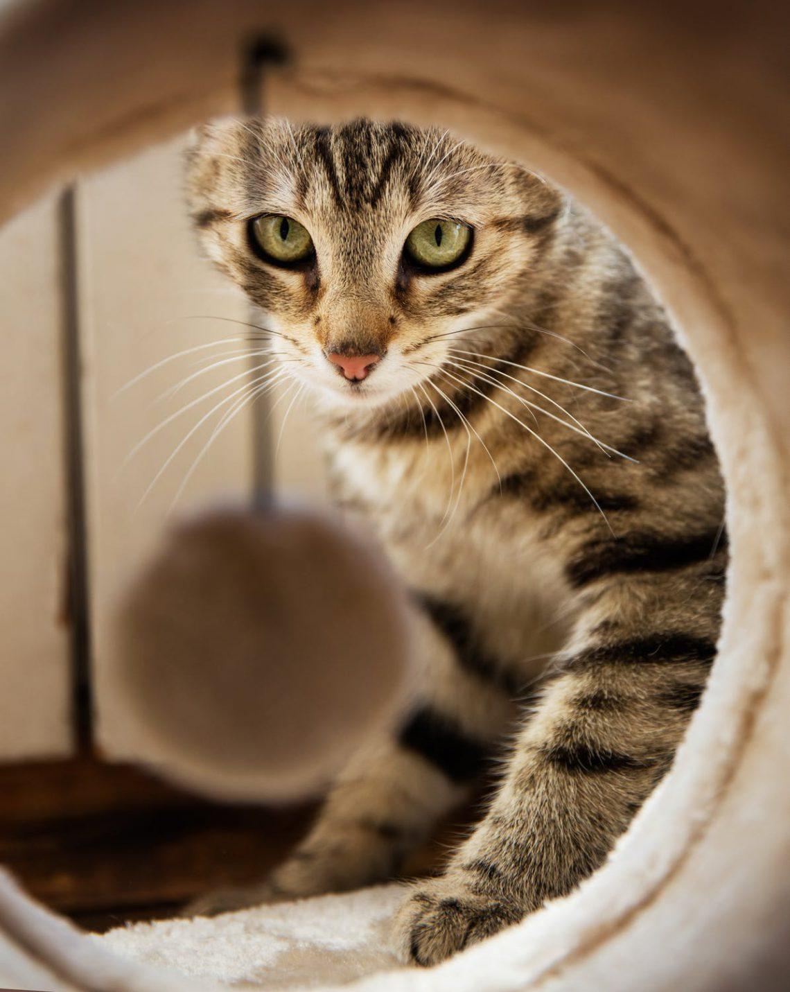 snoozle.nl kattenmandjes